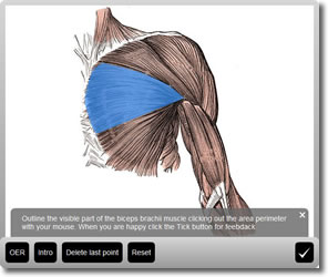 Try the Biceps Brachii activity